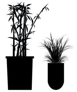 plant-sizes