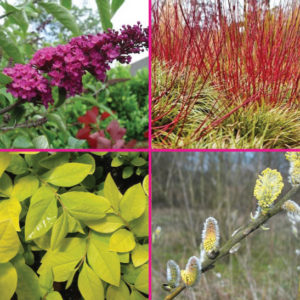 Plants for butterfiles for sale Canada