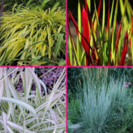 Ornamental grass for sale