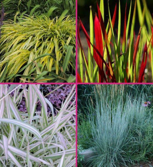 Ornamental grass for sale