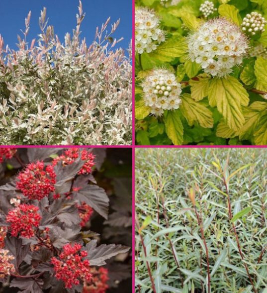 Colourful hedge