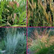 Native grasses for sale Canada