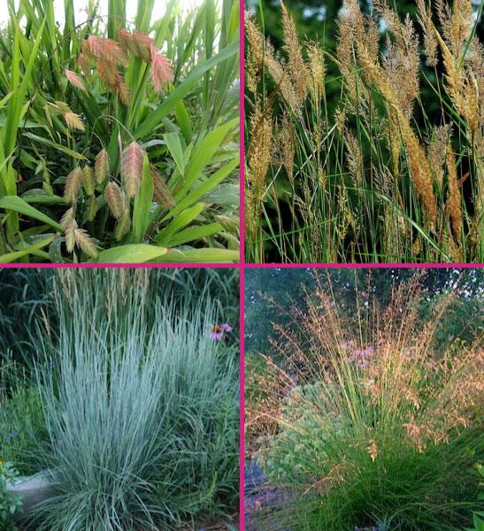 Native grasses for sale Canada