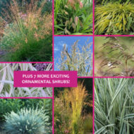 Ornamental grasses for sale Montreal