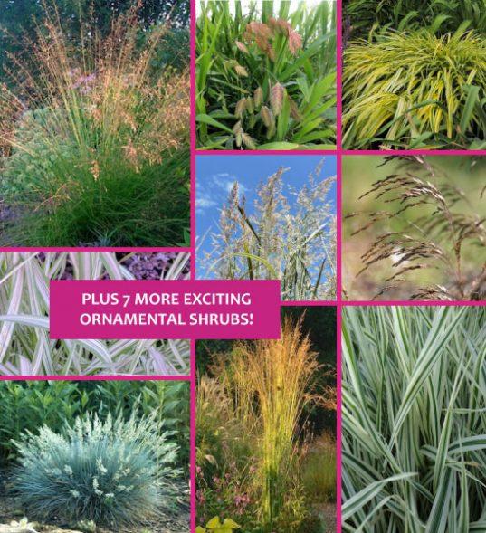 Ornamental grasses for sale Montreal