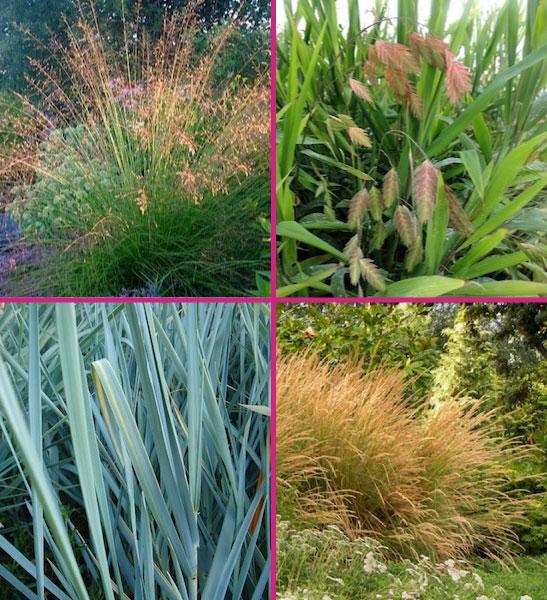 Zone 3 grasses