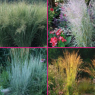 Zone 4 grasses for sale