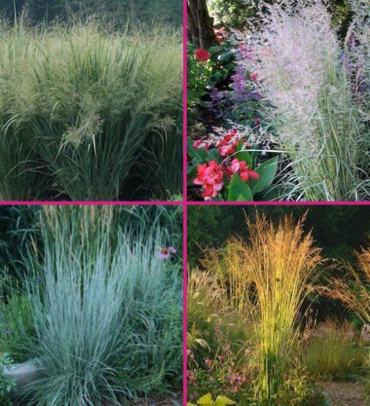 Zone 4 grasses for sale