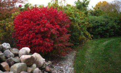 time to order plants for autumn planting