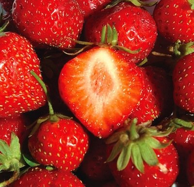 Fragaria mara des bois strawberries