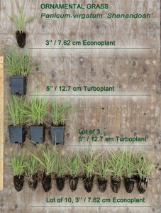 Grass size comparison 227x300 - Answers to Frequently Asked Questions