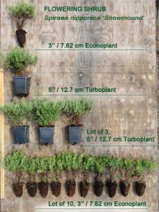 "Shrub size comparison 225x300 - What's the difference between ""Econoplants"" and ""Turboplants""?"