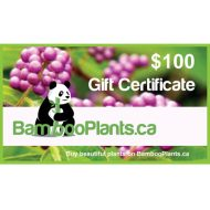 100 bambooplants gift certificate 1 190x190 - Gift Card - $100