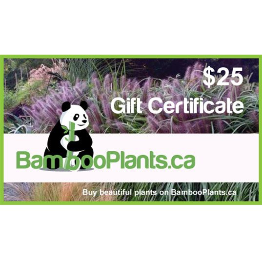 25 bambooplants gift certificate 1 537x537 - Gift Card - $25