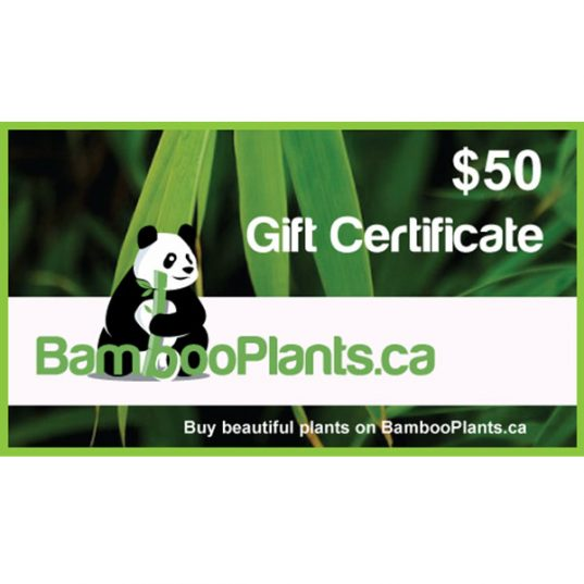 50 bambooplants gift certificate 537x537 - Gift Card - $50